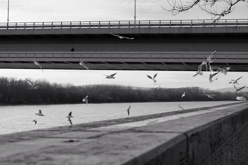 Seagulls flying over bridge against sky