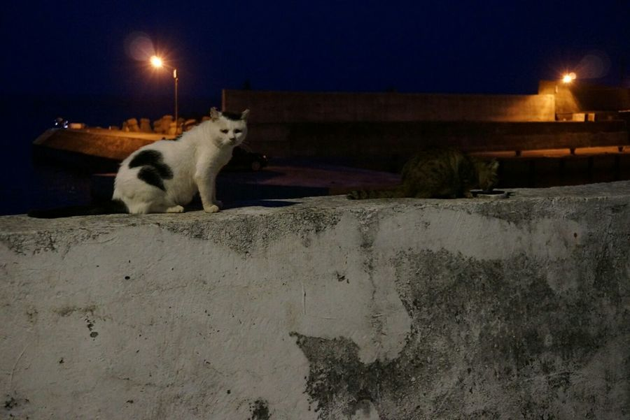 Taiwan Photographer Pacific Ocean Cats Of EyeEm Cateyes Catlovers What Are YOU Looking At? Beachphotography Darkness And Light Geography Trip What's For Dinner?