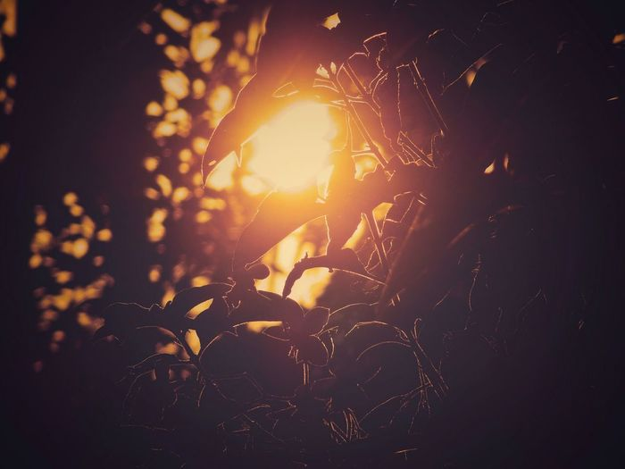 We are all broken, that's how the light gets in - Ernest Hemingway Nature_collection Kerala The Gods Own Country ;) Nature Photography Greenery Mornings Vibes Morningvibes Sunlight Nature Tree Outdoors
