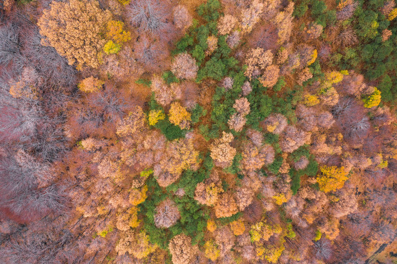 Full frame shot of plants and trees during autumn