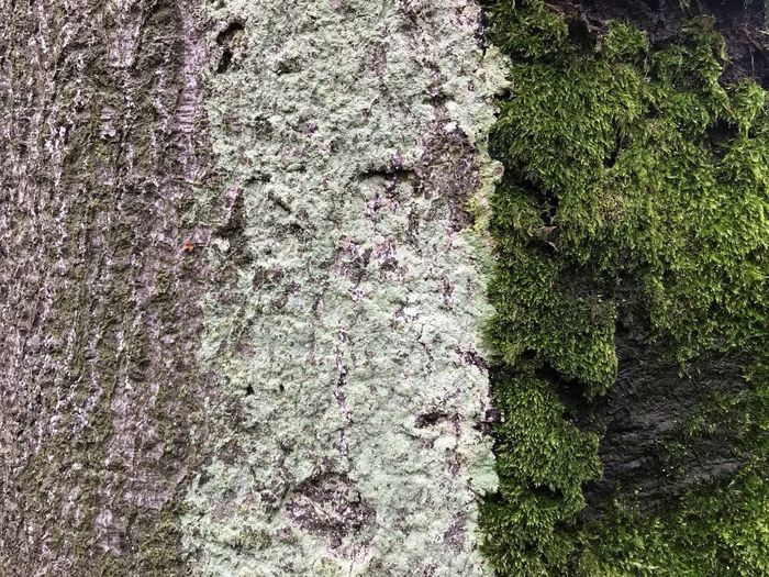 Moss and lichen on a tree Hintergrund Organic Flechte Moos Lichen Lichen On A Tree Nobody Full Frame No People Day Backgrounds High Angle View Nature Plant Textured  Green Color Close-up Moss Growth