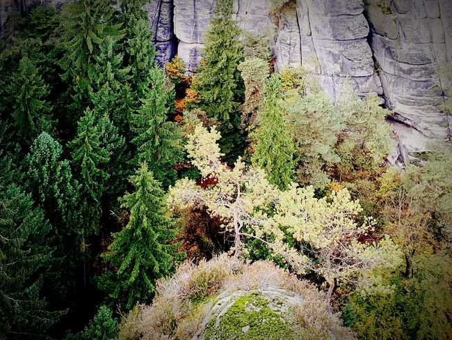 High Angle View Nature Green Color Beauty In Nature Tranquility