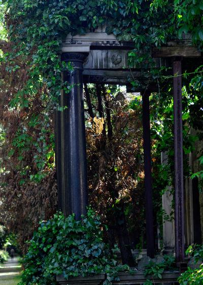 Cemetery Cmentarz Cmentarzżydowski Ivy Lush Foliage No People Old Overgrown Tomb Tranquility