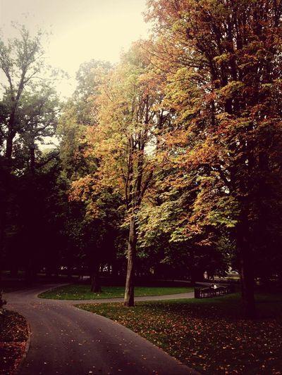 Park nabij station Breda Taking Photos TreeNaturelovers Landscape