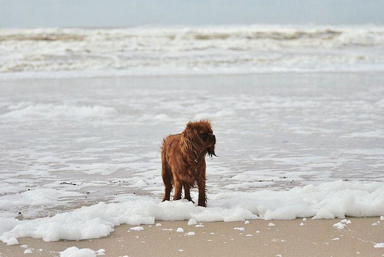 Dog on the sea shore