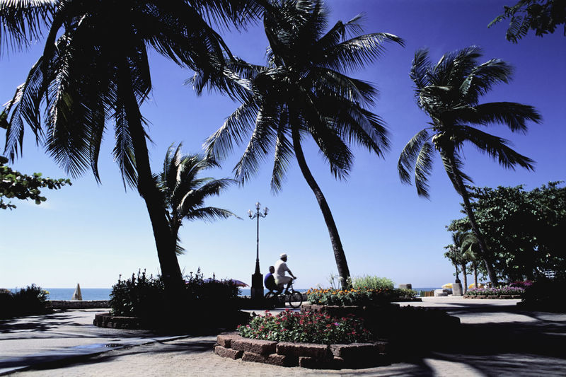 Palm trees at park by sea against clear blue sky