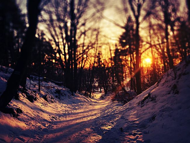 Tree Nature Sunset Winter Cold Temperature Beauty In Nature Snow Forest