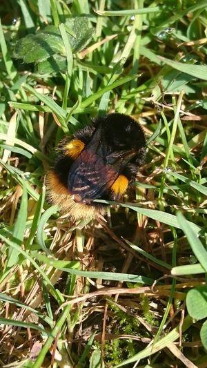 Bee... Bee Bee