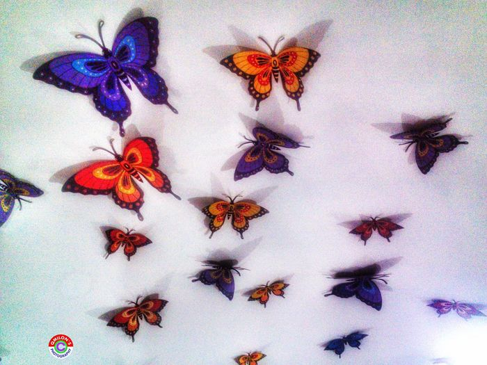 Artificial Butterfly Butterfly Indoors  Insect No People Showpiece Decoration Bangladesh 🇧🇩 EyeEm Bangladesh Natural Bangladesh Photooftheday Photography Photos Around You