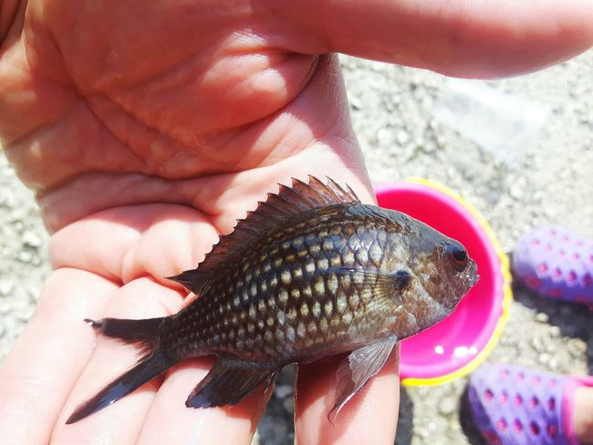 little fish Activities Fun Fish Blackish Keep In Hand People Summer Human Hand Sea Life Beach UnderSea Seafood Close-up Catch Of Fish Fishes