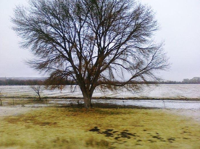 Arizona Winter Sniw Trees Tree And Sky Arizona Winter Fine Art Photography