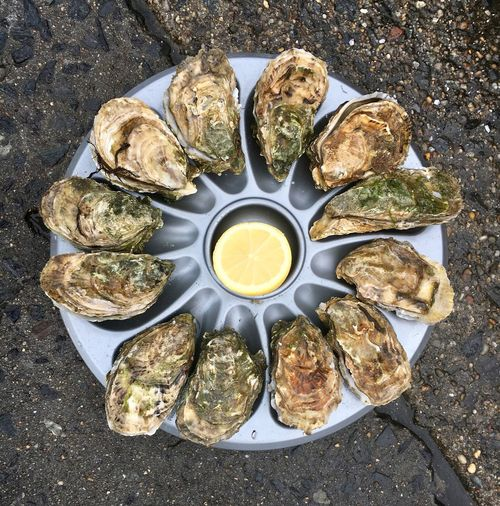 French oysters. Lemon Travel Travel Destinations Normandie France Oyster  Oyster Time Food Table No People Plate High Angle View Directly Above Food And Drink Seafood Healthy Eating Variation Ready-to-eat Freshness Close-up Day