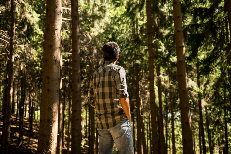 Active young adult man enjoy standing in wild pine forest on mountain in sunny summer day outdoor Adult Calm Hiking Holiday Man Pine Sunlight Sunny Tree Trekking Walk Wood Active Adventure Causal Clothing Day Forest Lifestyles Mountain Outdoors Real People Summer Sun Traveler Wild