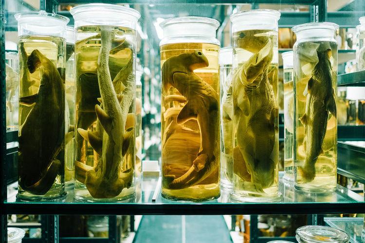Sea specimen in jars on shelf at laboratory