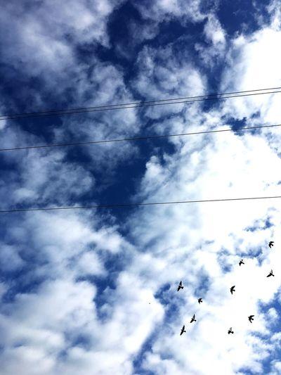 Racing Pigeons Flying under Blue Clouded Skies