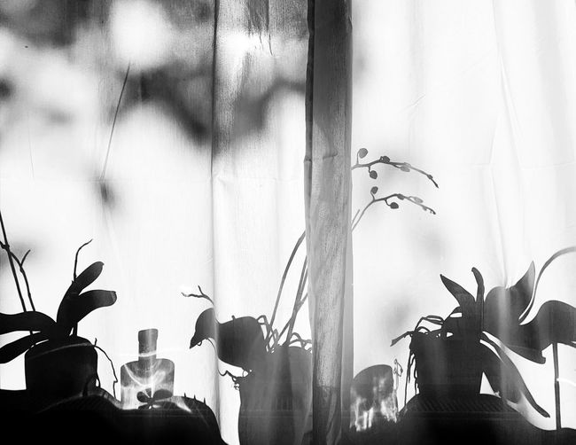 Black & White Sunshine. ShotOnIphone EyeEm Best Edits EyeEmBestPics EyeEm Selects EyeEm Best Shots Photooftheday Photography Photographer Capture Close-up Check This Out Blackandwhite Photography Blackandwhite Plant Window Nature Growth Day Leaf Plant Part Indoors  Transparent Silhouette Built Structure No People Potted Plant Close-up Flower Flowering Plant Sunlight