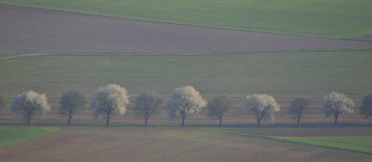 In A Row Agriculture Day Field Germany Grass Green Color Land Nature No People Rural Scene Tranquil Scene Tree Tree Alley