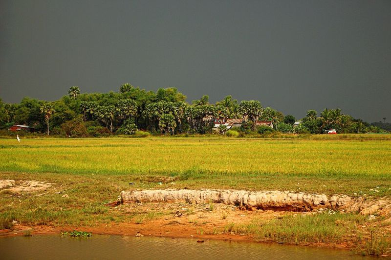 Driving back from Tonlé Sap to Siem Reap the approaching storm amplified the colours of nature dramatically. Cambodia Light And Shadow Darkness And Light Rice Field Field Nature Photography EyeEm Nature Lover Eye4photography  Beautiful Nature Rural Scenes Landscape_Collection Landscape Travel Photography No People Taking Photos Showcase: February Ladyphotographerofthemonth Canon