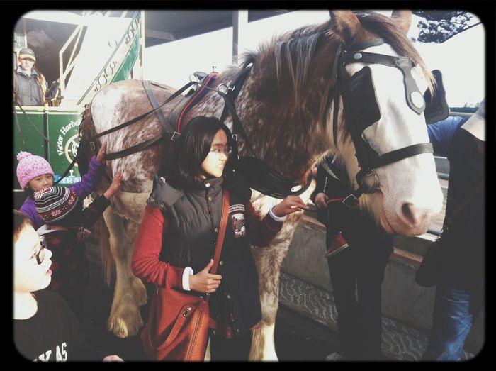 Wowww Horse Having Fun