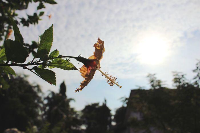 EyeEm Selects Nature Photography Nature Naturelover Flower Flowers, Nature And Beauty Hibiscus 🌺 Sunlight Sunshine EyeEmNewHere