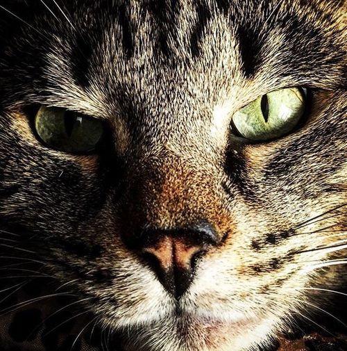 Cat One Animal Animal Themes Domestic Cat Feline Whisker Pets Domestic Animals Zoology Animal Head