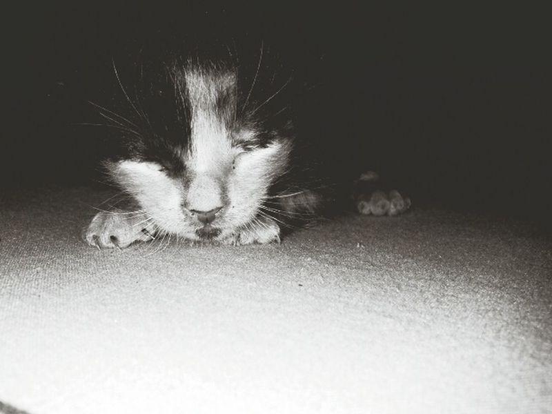 Blackandwhite Sleeping Relaxing