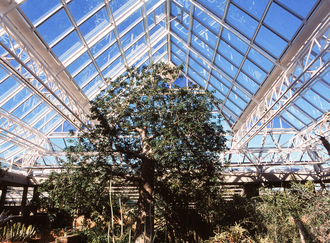 Ecosystem  Architecture Botany Built Structure Ceiling Day Glass Glass - Material Greenhouse Growth Indoors  Low Angle View Nature No People Plant Plant Nursery Sky Skylight Sunlight Transparent Tree
