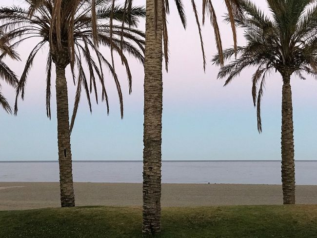 Sommergefühle Palm Tree Sea Tree Beach Tree Trunk Water Horizon Over Water Scenics Tranquil Scene Beauty In Nature Nature Tranquility Growth Outdoors No People Day Sky Nofilter#noedit
