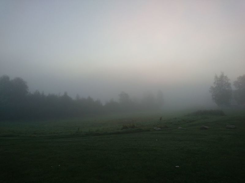 Fog Tranquil Scene Tranquility Scenics Landscape Tree Foggy Field Beauty In Nature Rural Scene Sky Nature Non-urban Scene Majestic Atmosphere Solitude Green Color Agriculture Remote Dawn October Norrland Middle Of Sweden Mesmerizing