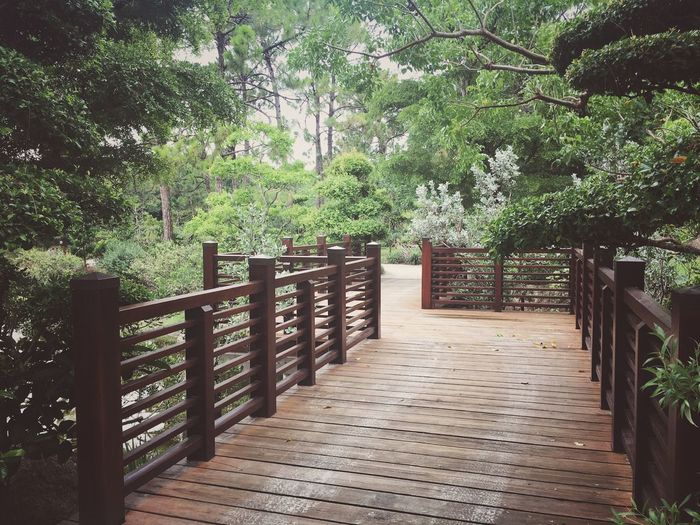 IPhone Photography Japan Plant Tree Railing Nature Day Growth Gate No People Green Color Architecture Security Outdoors Footpath Safety Park