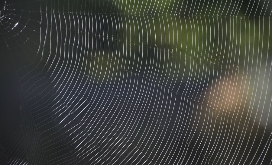 Abstract Backgrounds Beauty In Nature Close-up Detail Fragility Full Frame Long Exposure Motion Natural Pattern Nature Night No People Outdoors Pattern Spider Web Star Trail Vulnerability