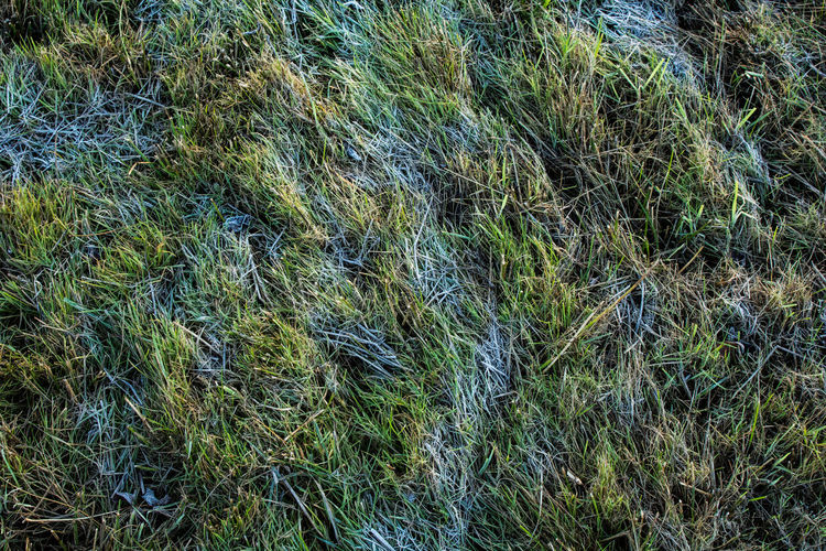 Plant Backgrounds Growth Full Frame Green Color Grass No People Day Nature Beauty In Nature Land Tranquility High Angle View Outdoors Field Close-up Textured  Blue Environment Tranquil Scene
