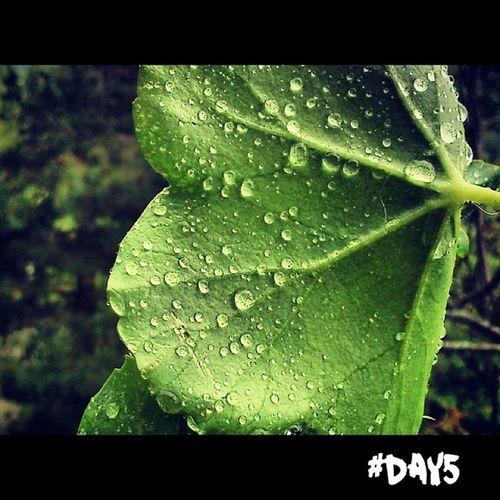 RainyDay. 100happydays Day5 Rain RainyDay green colors nature macro igersAbruzzo igersItalia