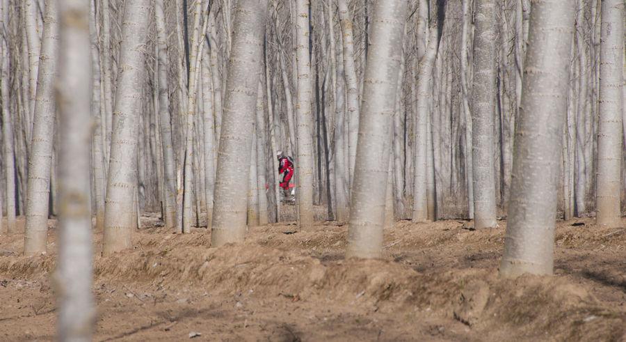 Devesa Trees Forest Motard Motorbike Motorista One Person Plantación Vertical Lines