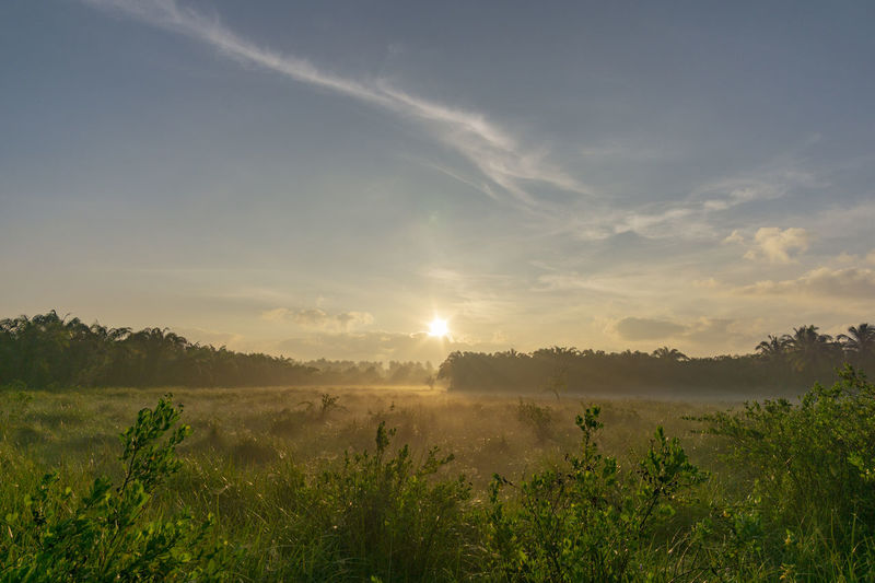 Fog over the grass In the morning Nature along the way in Chumphon Province Sky Beauty In Nature Plant Scenics - Nature Tranquil Scene Tranquility Landscape Environment Non-urban Scene Tree Field Cloud - Sky Growth Nature Land Sun No People Idyllic Sunlight Sunset Outdoors