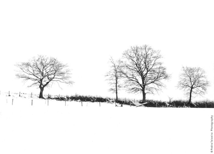 Highkey Luxembourg Discover Luxembourg Blackandwhite Black And White Trees