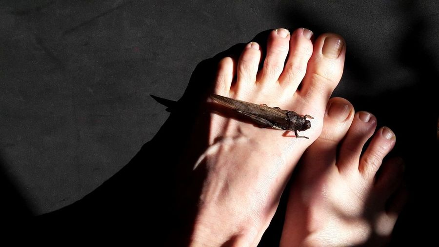 hrasshopper on my skin Portrait Of A Woman Light And Shadow Personal Perspective One Person Part Of Body Feet Foot Insect Insect Photography Grasshopper Grasshopper Insect Nature Shadow Nail Polish Pleading Close-up Fingernail Finger Ladybug Human Feet