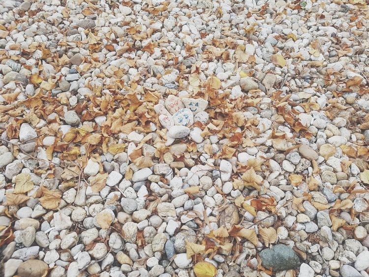 Full Frame Beach Backgrounds Day Abundance Pebble Nature Sand Outdoors No People Large Group Of Objects Pebble Beach Beauty In Nature Close-up