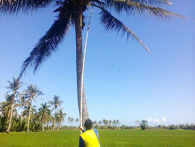 Coconut Tree Treephotography Eyem Gallery Nature_collection Moments Of Life The Great Outdoors - 2017 EyeEm Awards