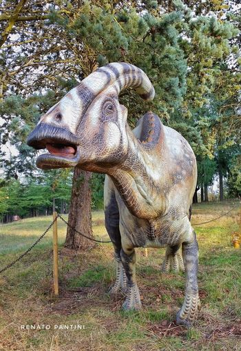 Parasaurolophus walkeri Parasaurolophus Animal Themes Dinosauro Dinosauri Dinosaur Dinosaurs DinosaursAroundTheWorld Dinosaurs Park Mostra Mostradinosauri Chianciano Terme Parasaurolofo