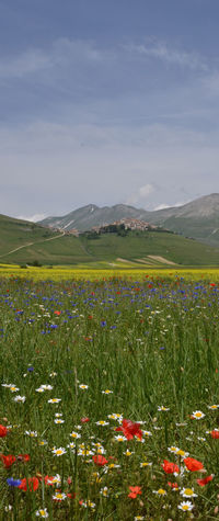 Beauty In Nature Castelluccio Castelluccio, Norcia Cloud - Sky Colorful Colors Field Flowers Idyllic Italia Italy Landscape Nature No People Outdoors Sky Spring Flowers Tranquil Scene Tranquility Umbria Umbria, Italy Italy❤️ Traveling Colours