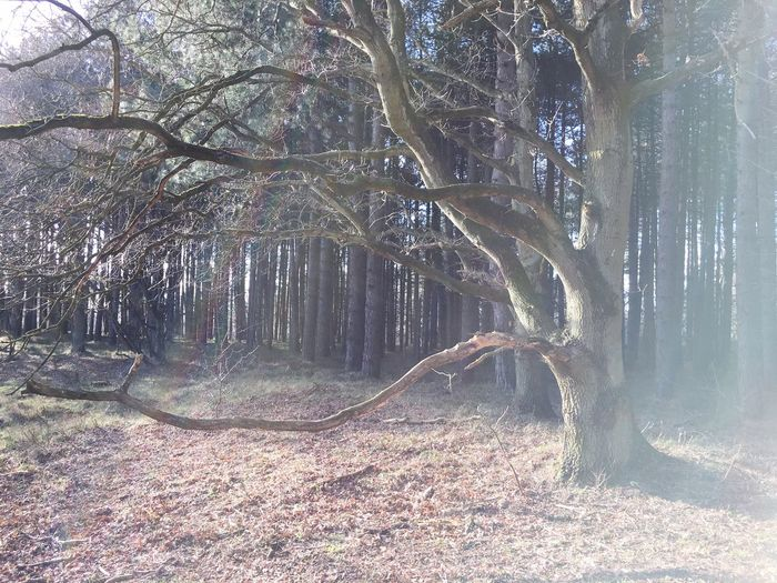 Woods Sun Trees Grass Nature Winter February 2016 Light Lightfall Rainbow Pinetrees IJmuiden