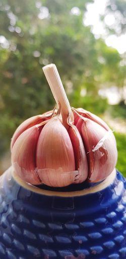 garlic Alho