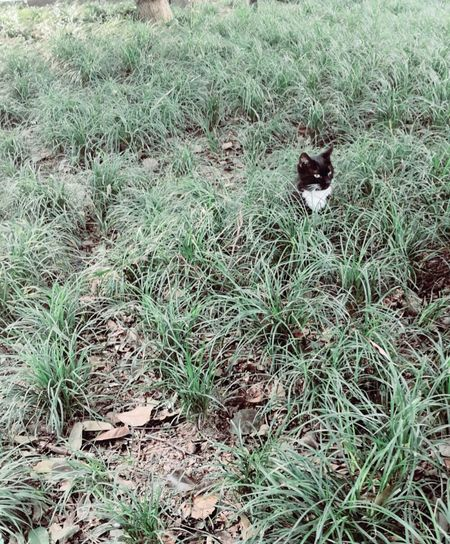 Grass Plant Land Field One Animal Animal Nature Day Animal Themes No People High Angle View Mammal Growth Green Color Pets Domestic Animals Outdoors Animals In The Wild