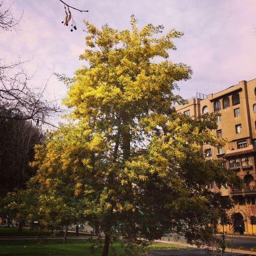 Primavera Springtime Trees Don Aromo