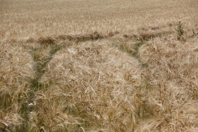 Getreide,Germany