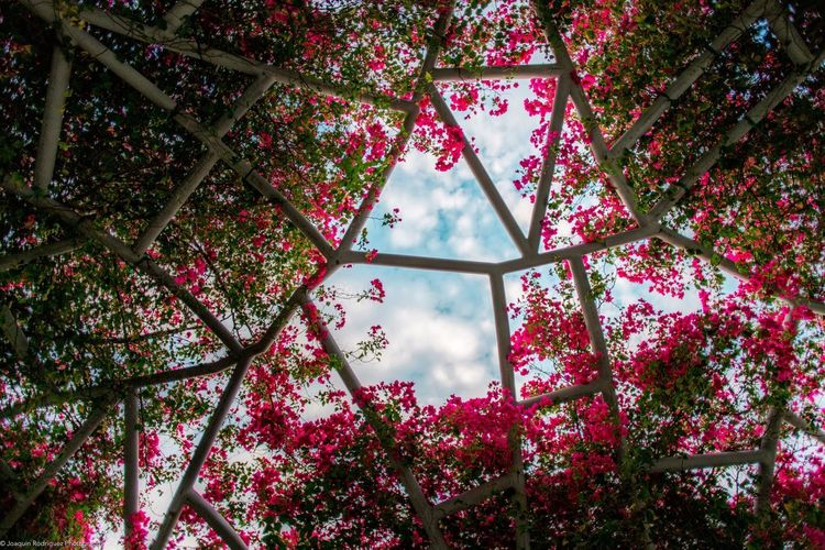 Flower Web. Part of my Urban Beauty collection on JoaquinR.com Miami Miamiphotography Photography Lincoln Road Miamiphotographer Urban Beauty Abstract Flowers Structure The Street Photographer - 2017 EyeEm Awards