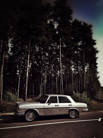 Silver ghost Isolation No People Mercedes Mercedes-Benz Silver  Silver - Metal Silver Colored Trees Vintage Car Mystery Contrast Car Parking Luxury Sunlight EyeEmNewHere