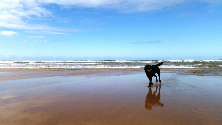 What I Value Beach Sun, Sea, Sand View Pet Dog Labrador Puppy Loving Life  Happy