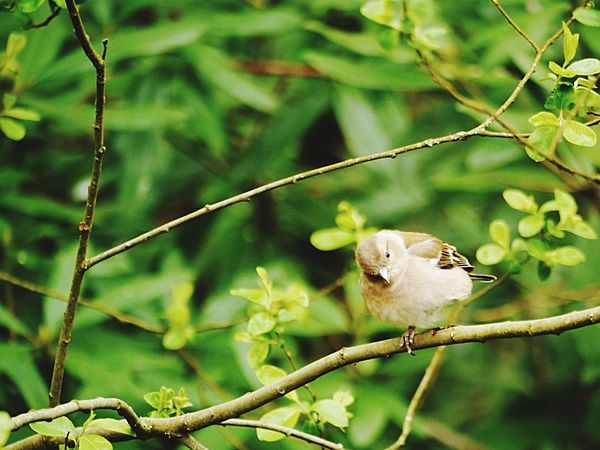 Devon One Animal Tree Animals In The Wild Nature Branch Animal Themes Outdoors No People Growth Day Bird Perching Mammal Nature Beauty In Nature EyeEmNewHere